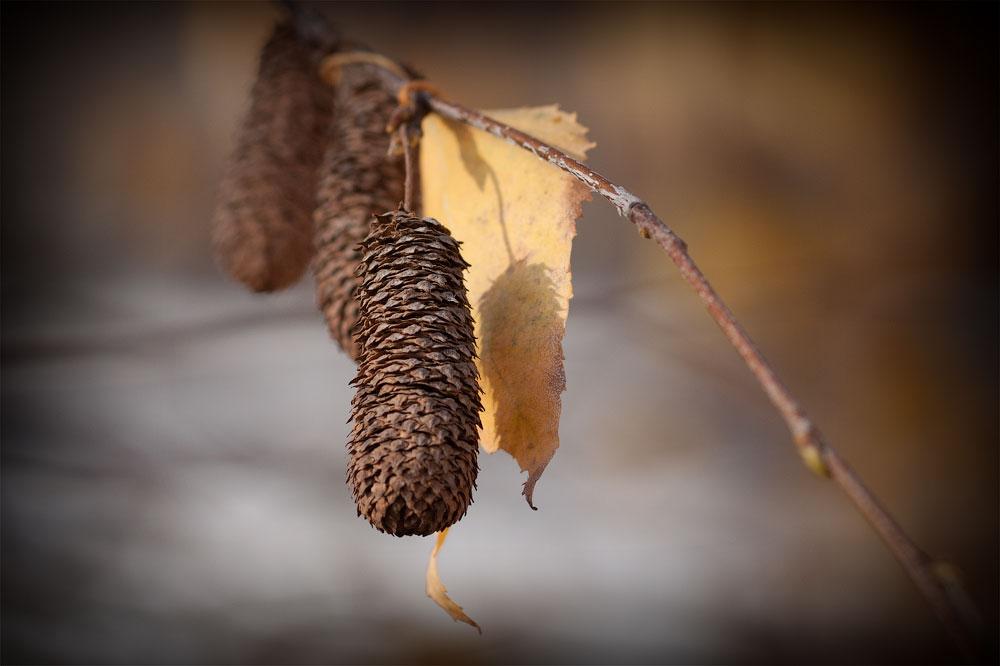 Осень в Тирасполе (12)