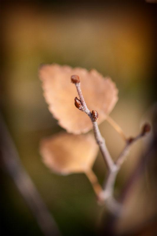 Осень в Тирасполе (4)