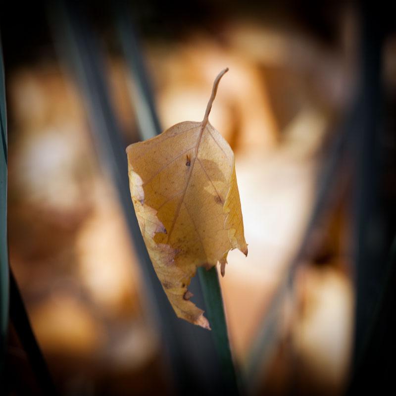 Осень в Тирасполе (3)