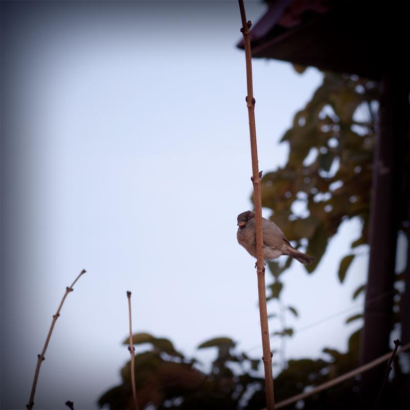 Осень в Тирасполе (2)