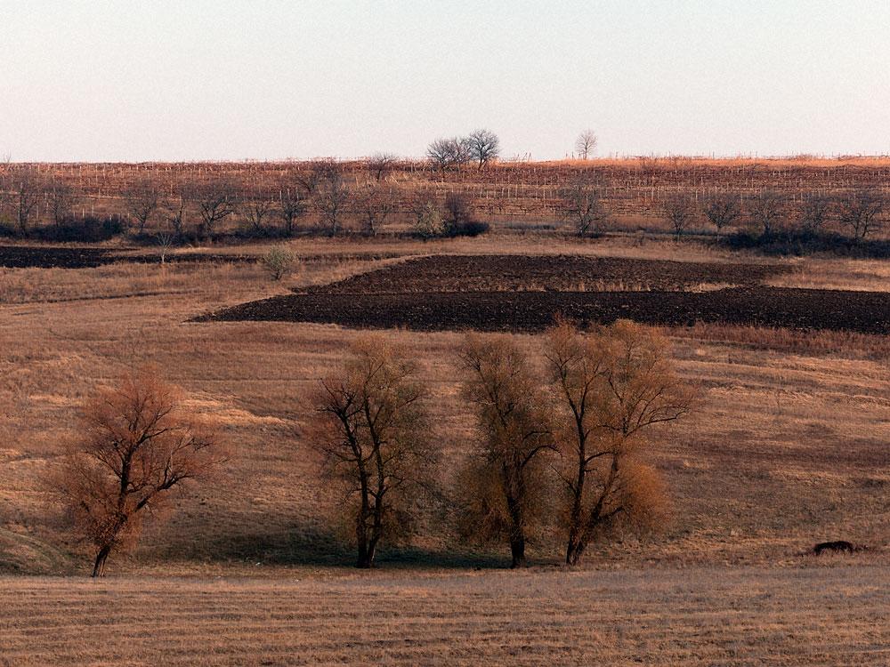 Поля у села Бульбоака Новоаненского района Республики Молдова (5)
