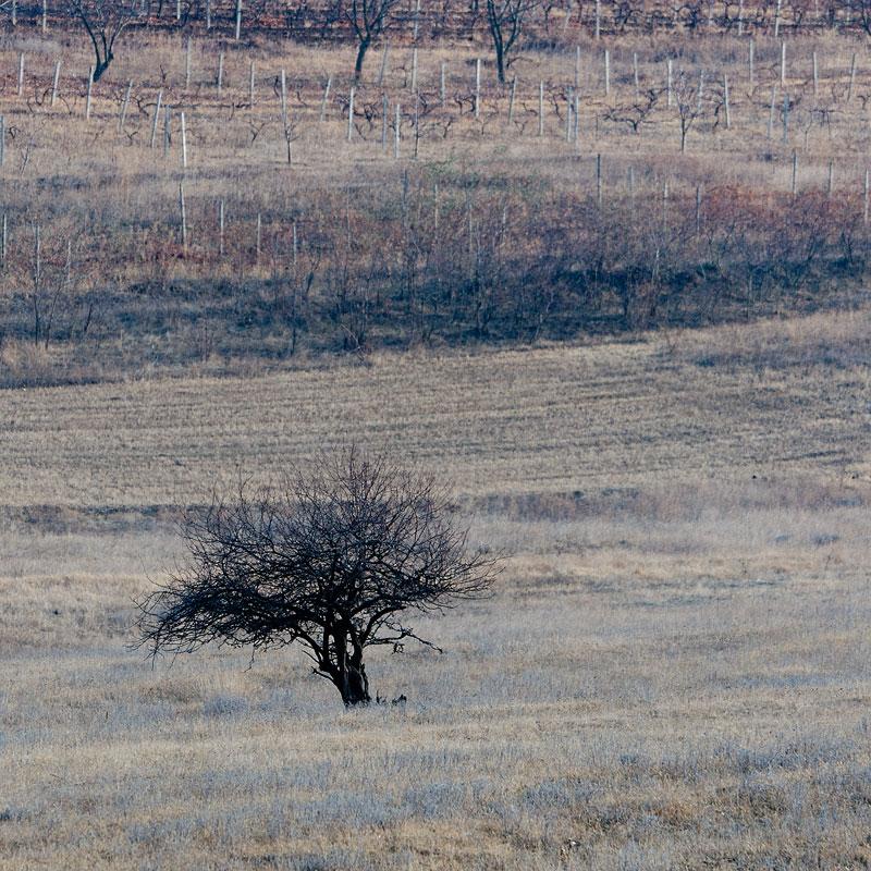 Поля у села Бульбоака Новоаненского района Республики Молдова (1)