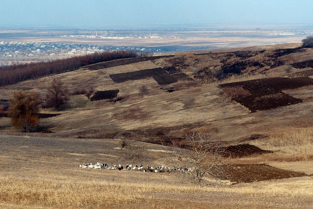 Поля у села Бульбоака Новоаненского района Республики Молдова (4)