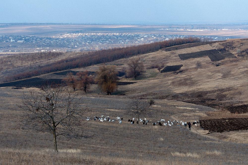 Поля у села Бульбоака Новоаненского района Республики Молдова (2)