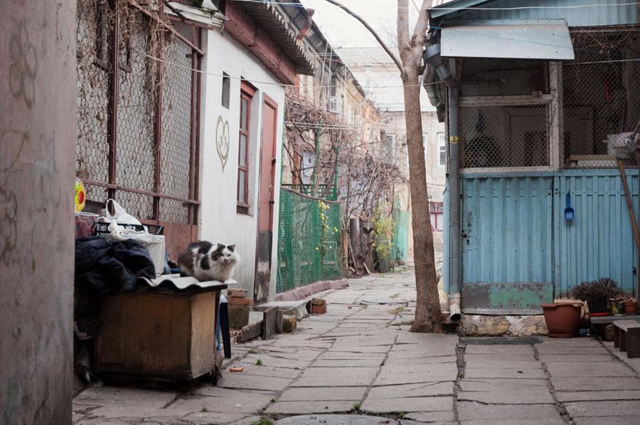 Новогодняя прогулка по Одессе - 31 декабря 2011 года (14)