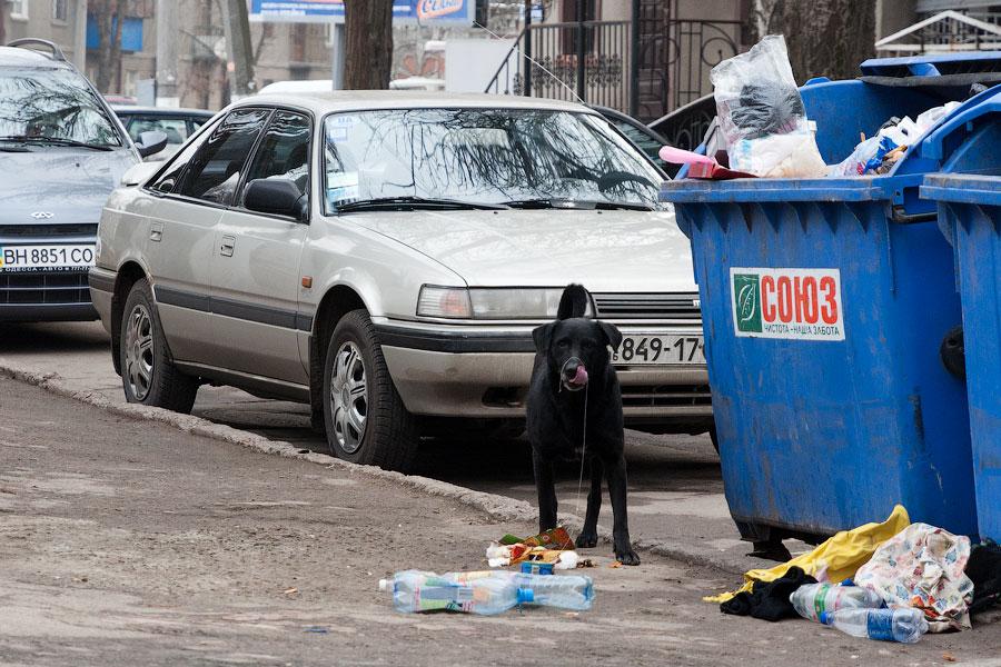 Новогодняя прогулка по Одессе - 31 декабря 2011 года (19)