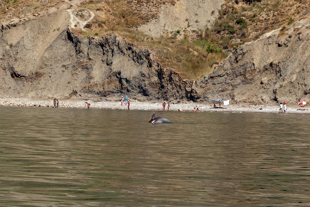 Крым, поселок Орджоникидзе (Феодосия), пляжи - лето 2011 года (37)