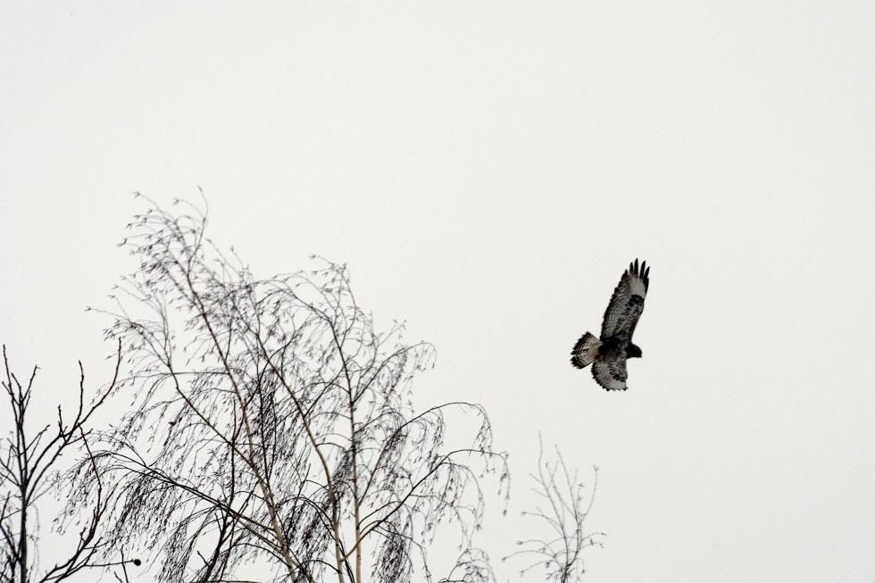 Приднестровье, трасса Рыбница - Тирасполь, февраль 2012 года (2)