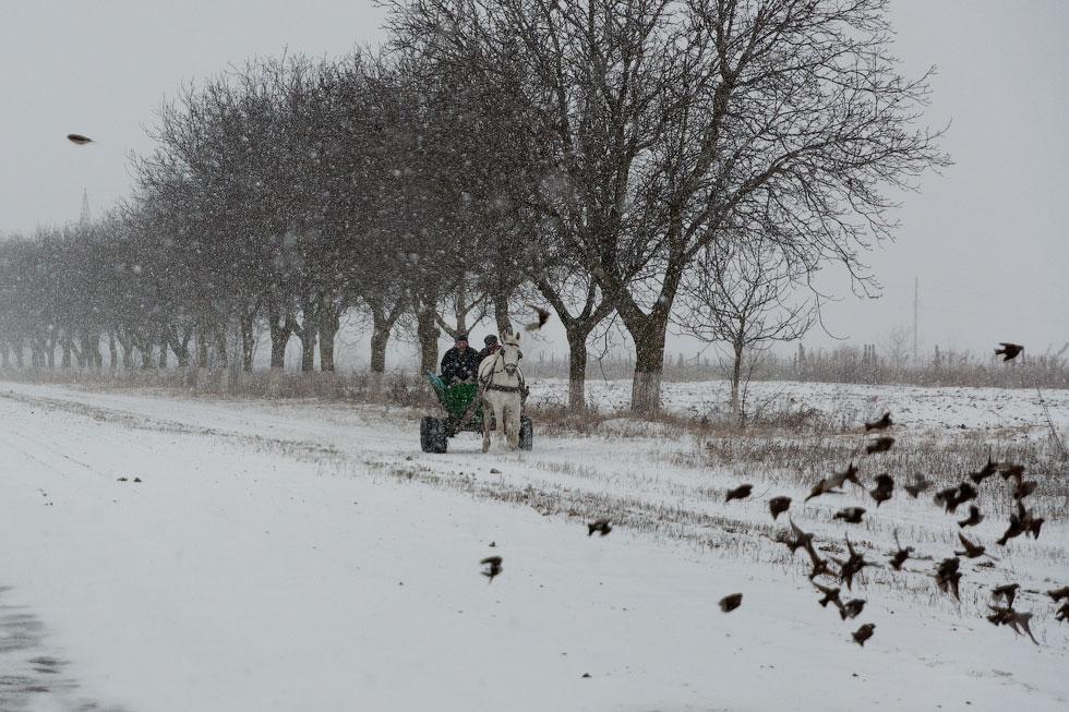 Приднестровье, трасса Рыбница - Тирасполь, февраль 2012 года (7)