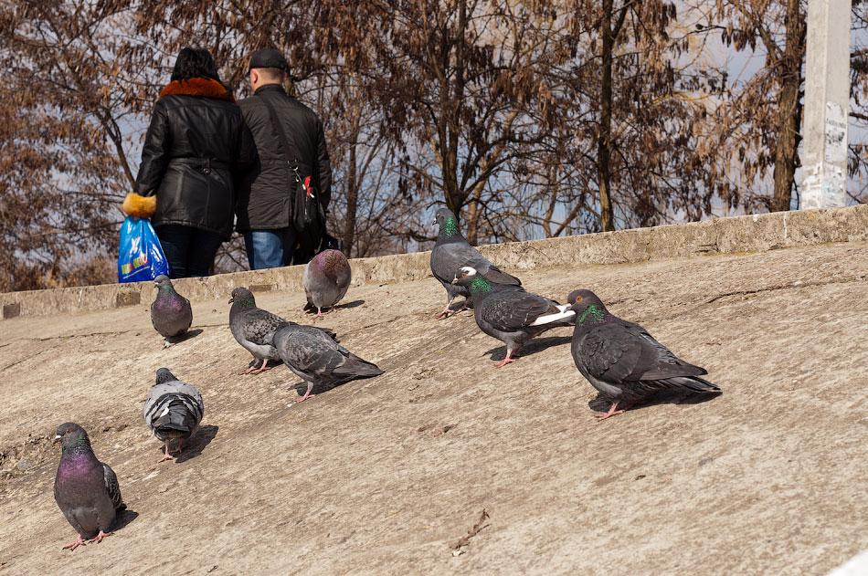 Весенний животный мир Тирасполя (2)