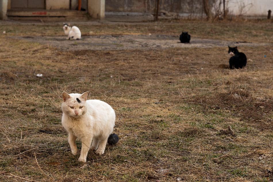 Весенний животный мир Тирасполя (1)