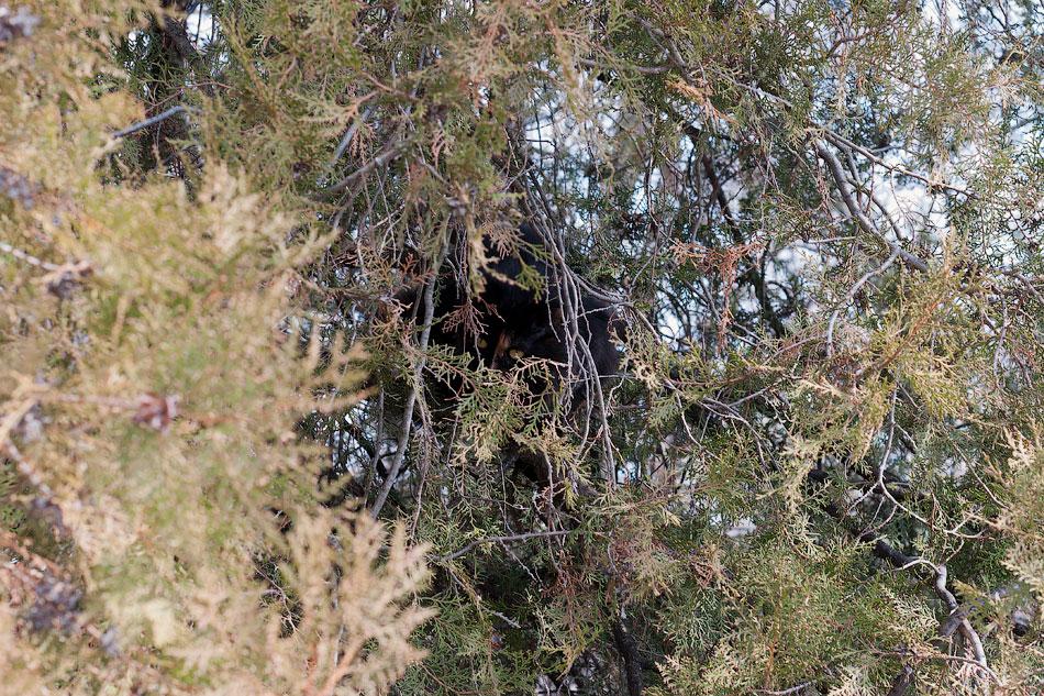 Кот прячется на дереве