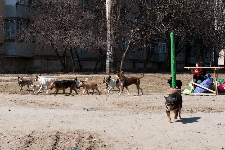 Бродячие собаки в Тирасполе, в районе Балки (1)