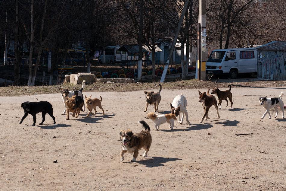 Бродячие собаки в Тирасполе, в районе Балки (2)