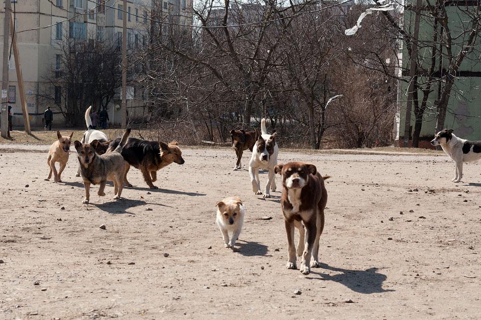 Бродячие собаки в Тирасполе, в районе Балки (3)