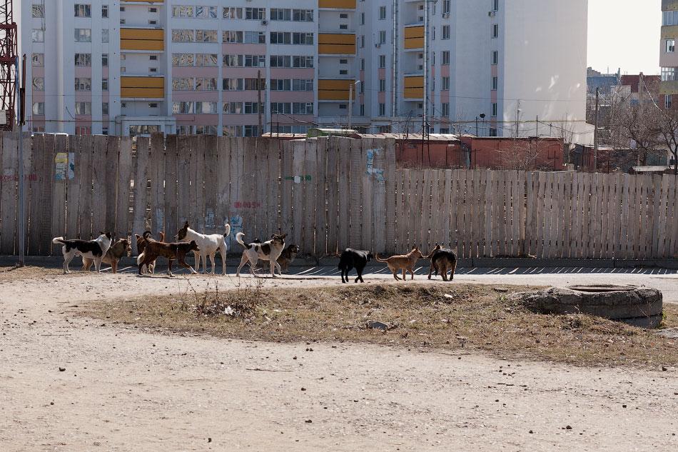 Бродячие собаки в Тирасполе, в районе Балки (4)
