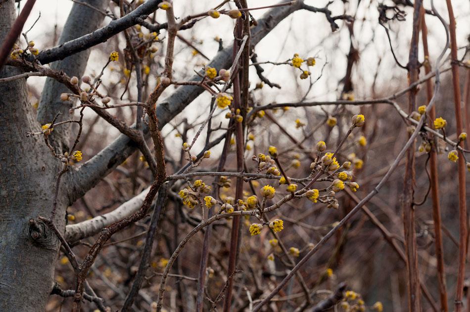 Фотопрогулка по Тирасполю: открытие весеннего сезона фотоохоты (5)
