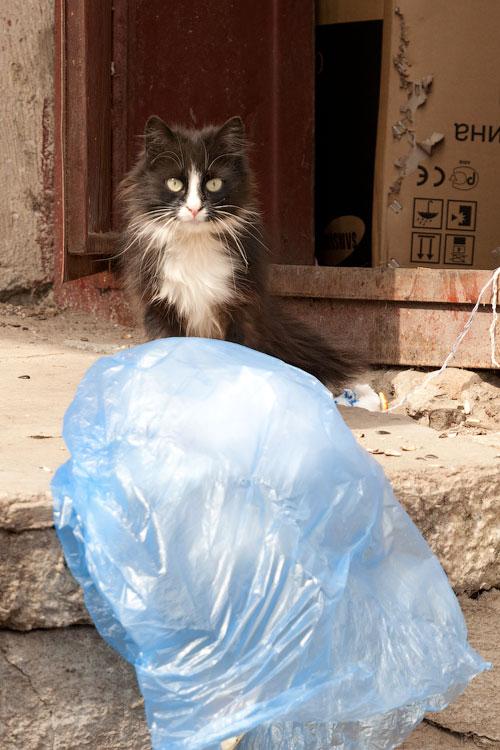 Фотопрогулка по Тирасполю: открытие весеннего сезона фотоохоты (11)