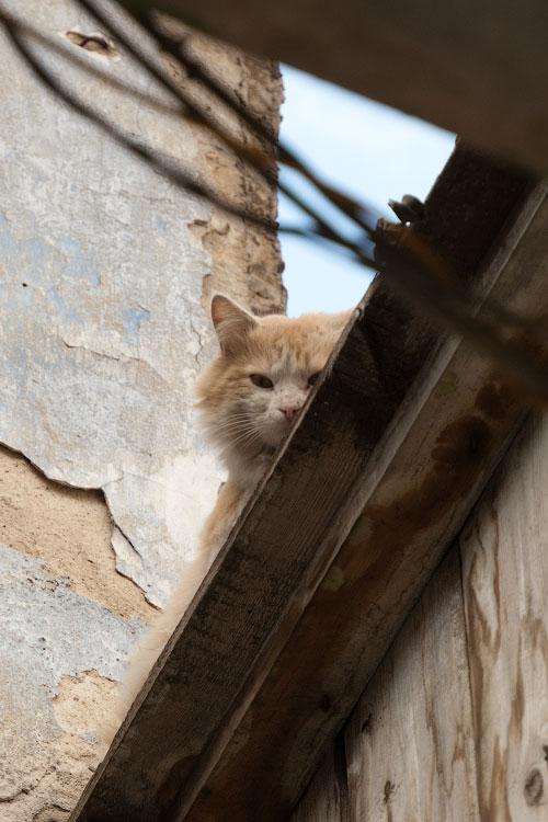 Фотопрогулка по Тирасполю: открытие весеннего сезона фотоохоты (12)