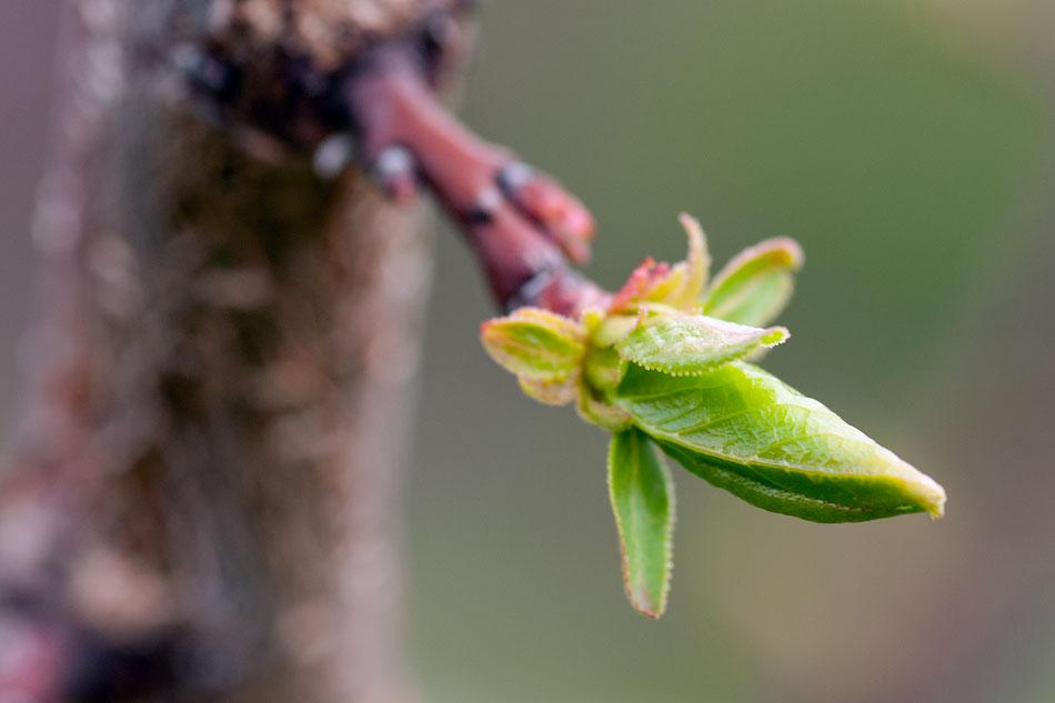 Весной в Тирасполе (3)
