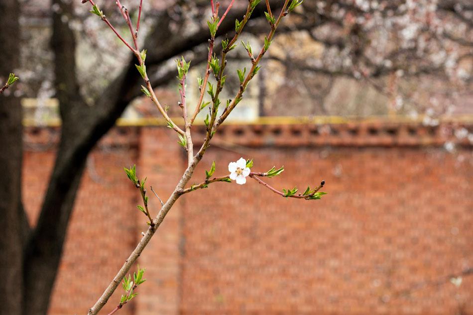 Весной в Тирасполе (6)