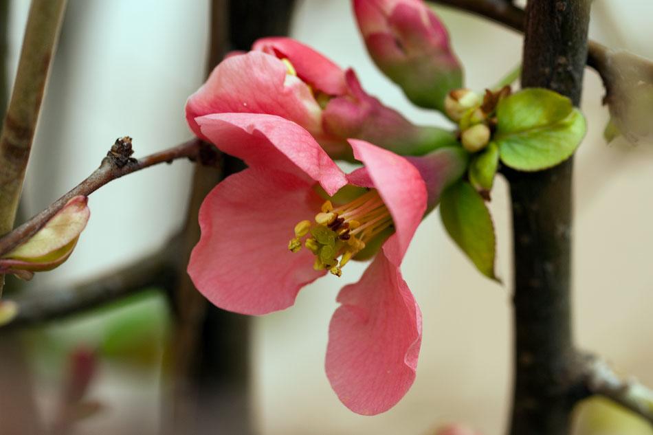 Весной в Тирасполе (8)