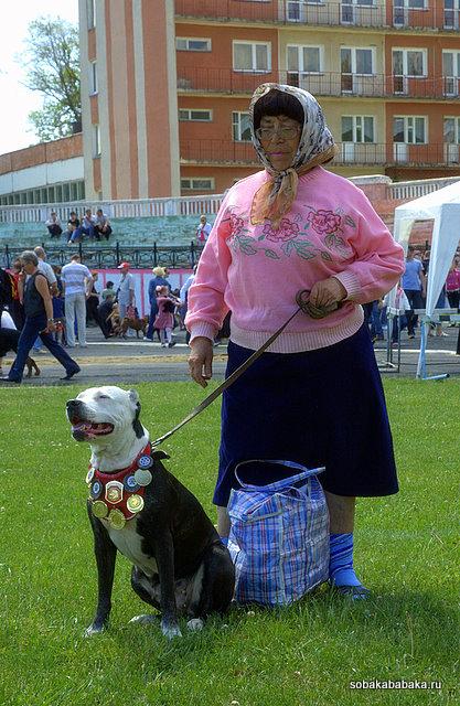 Выставка собак в Тирасполе, 27 мая