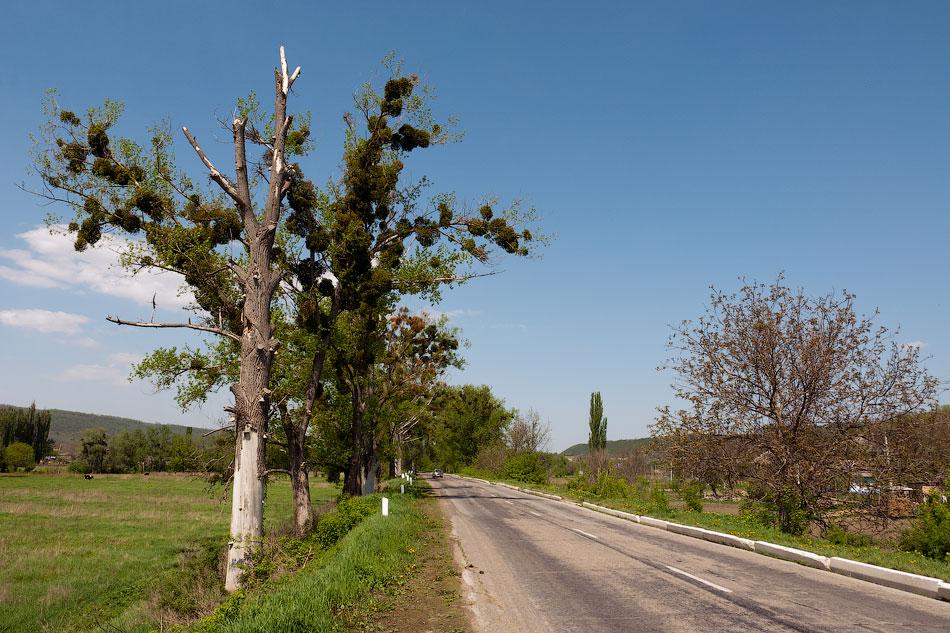 Поездка на север Приднестровья (Тирасполь - Рыбница - Рашков - Каменка - Строенцы) (35)