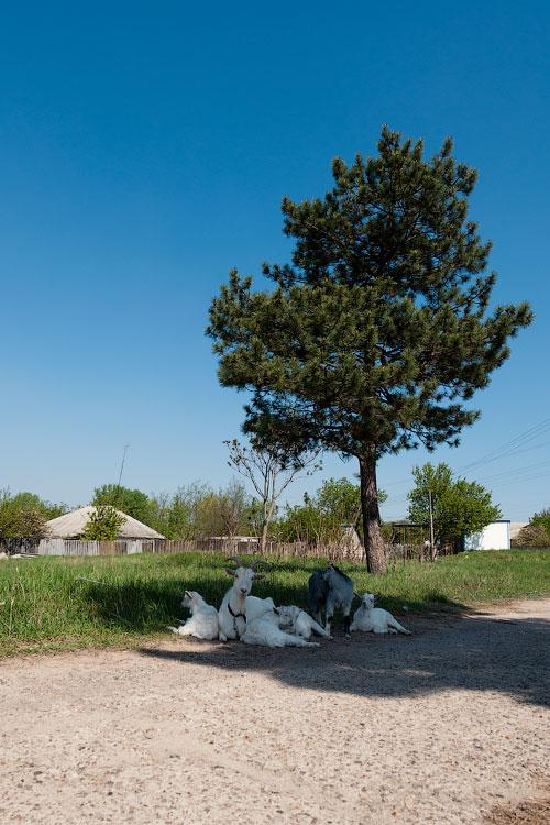 Поездка на север Приднестровья (Тирасполь - Рыбница - Рашков - Каменка - Строенцы) (63)