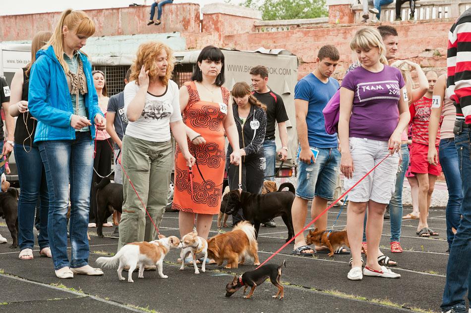 Международная выставка собак в Тирасполе, 27 мая 2012 года (12)