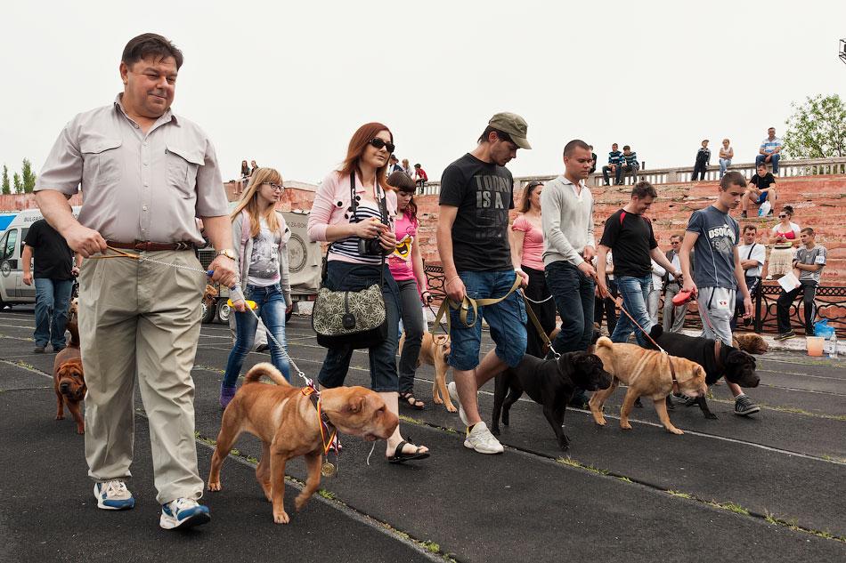 Международная выставка собак в Тирасполе, 27 мая 2012 года (13)