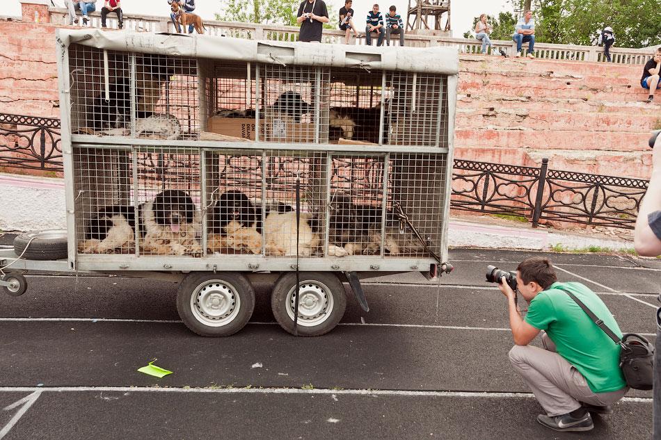 Международная выставка собак в Тирасполе, 27 мая 2012 года (14)