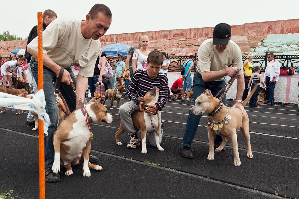 Международная выставка собак в Тирасполе, 27 мая 2012 года (15)