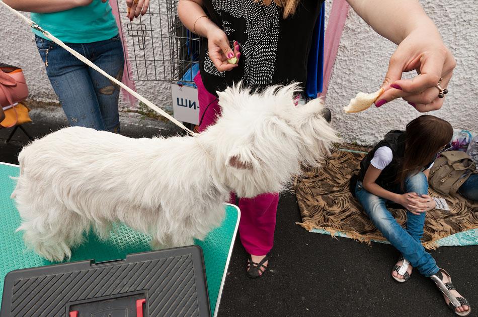 Международная выставка собак в Тирасполе, 27 мая 2012 года (20)
