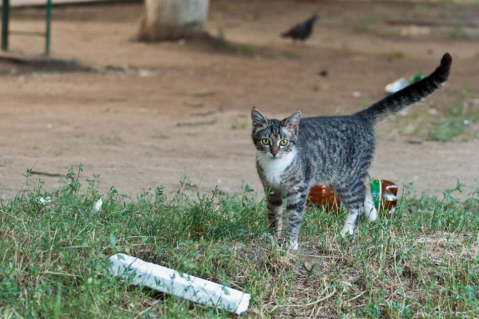Животный мир Тирасполя: кошки и собаки (1)