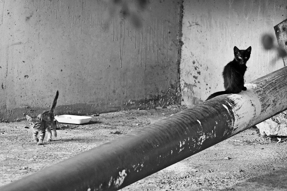 Животный мир Тирасполя: кошки и собаки (2)