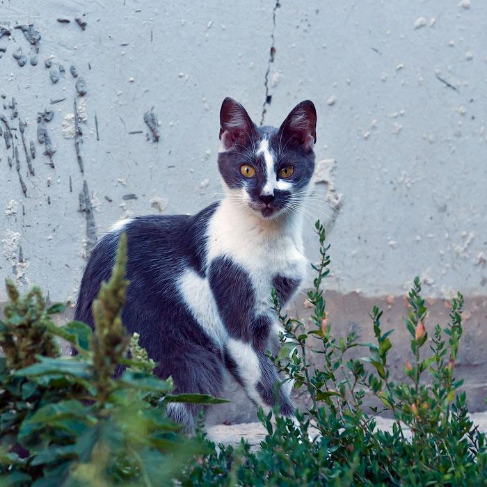 Животный мир Тирасполя: кошки и собаки (3)