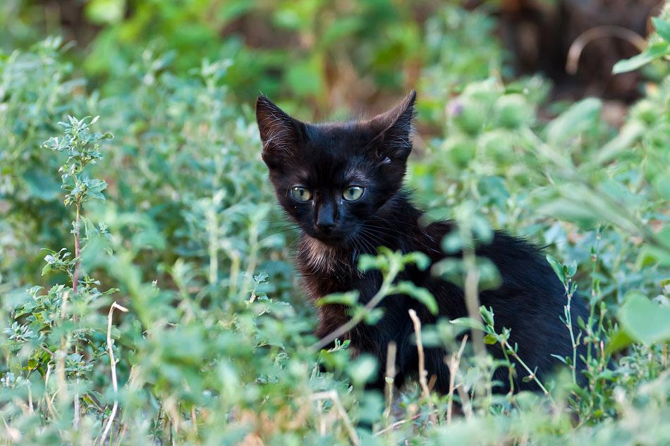 Животный мир Тирасполя: кошки и собаки (4)