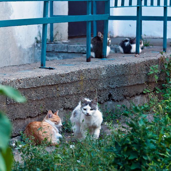 Животный мир Тирасполя: кошки и собаки (6)