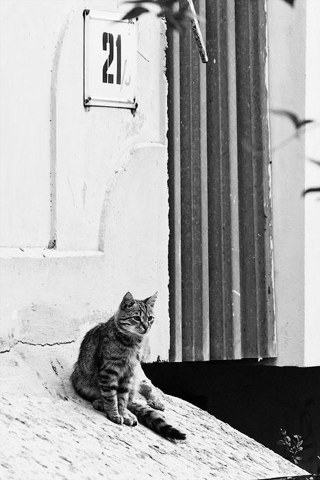 Животный мир Тирасполя: кошки и собаки (7)