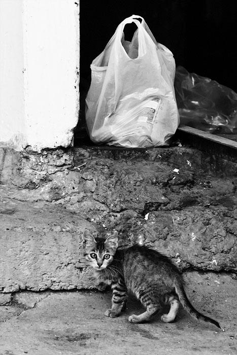Животный мир Тирасполя: кошки и собаки (8)