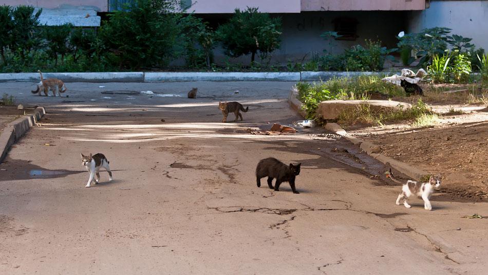 Животный мир Тирасполя: кошки и собаки (9)