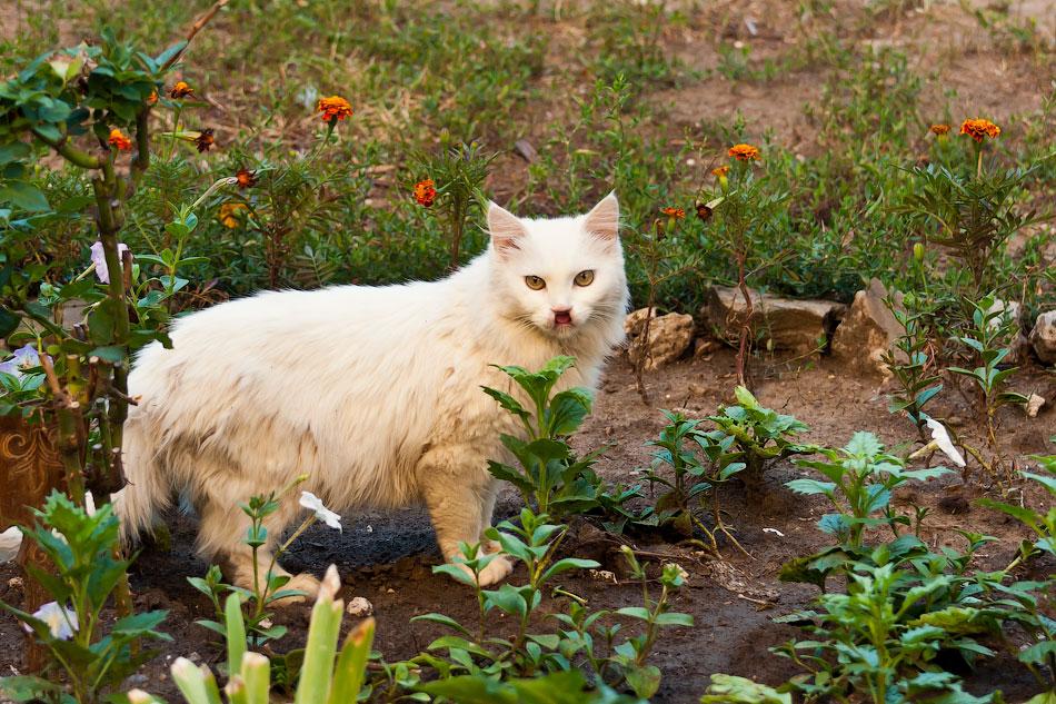 Животный мир Тирасполя: кошки и собаки (10)