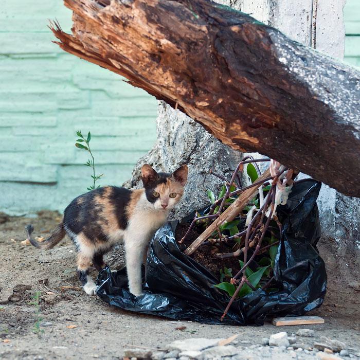 Животный мир Тирасполя: кошки и собаки (11)