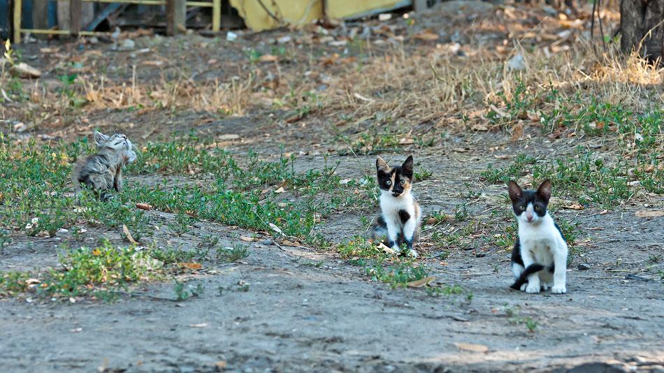 Животный мир Тирасполя: кошки и собаки (12)