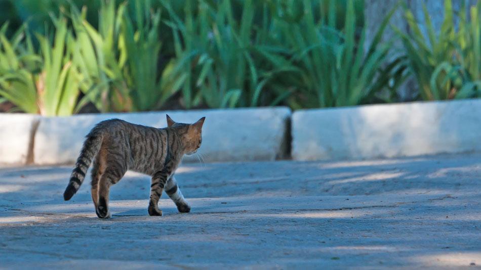 Животный мир Тирасполя: кошки и собаки (13)