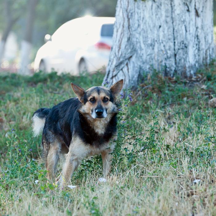 Животный мир Тирасполя: кошки и собаки (15)