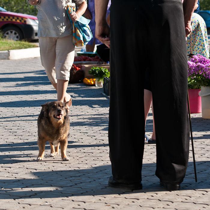 Животный мир Тирасполя: кошки и собаки (16)