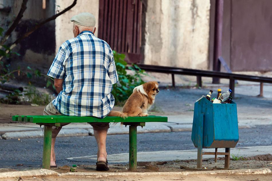 Животный мир Тирасполя: кошки и собаки (17)