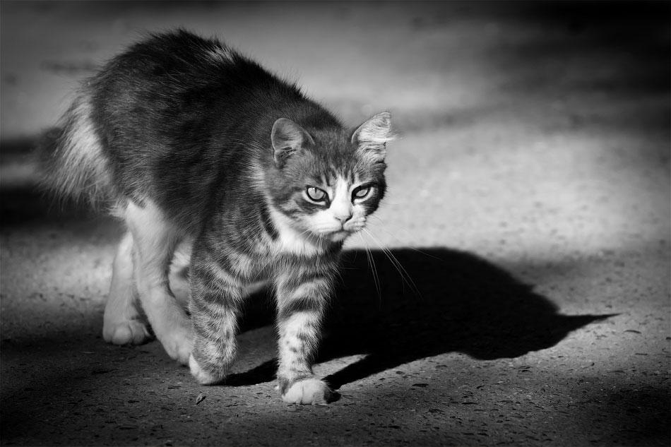 Животный мир Тирасполя: кошки и собаки (18)